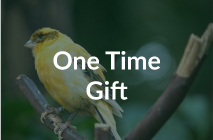 Donate Now - One Time